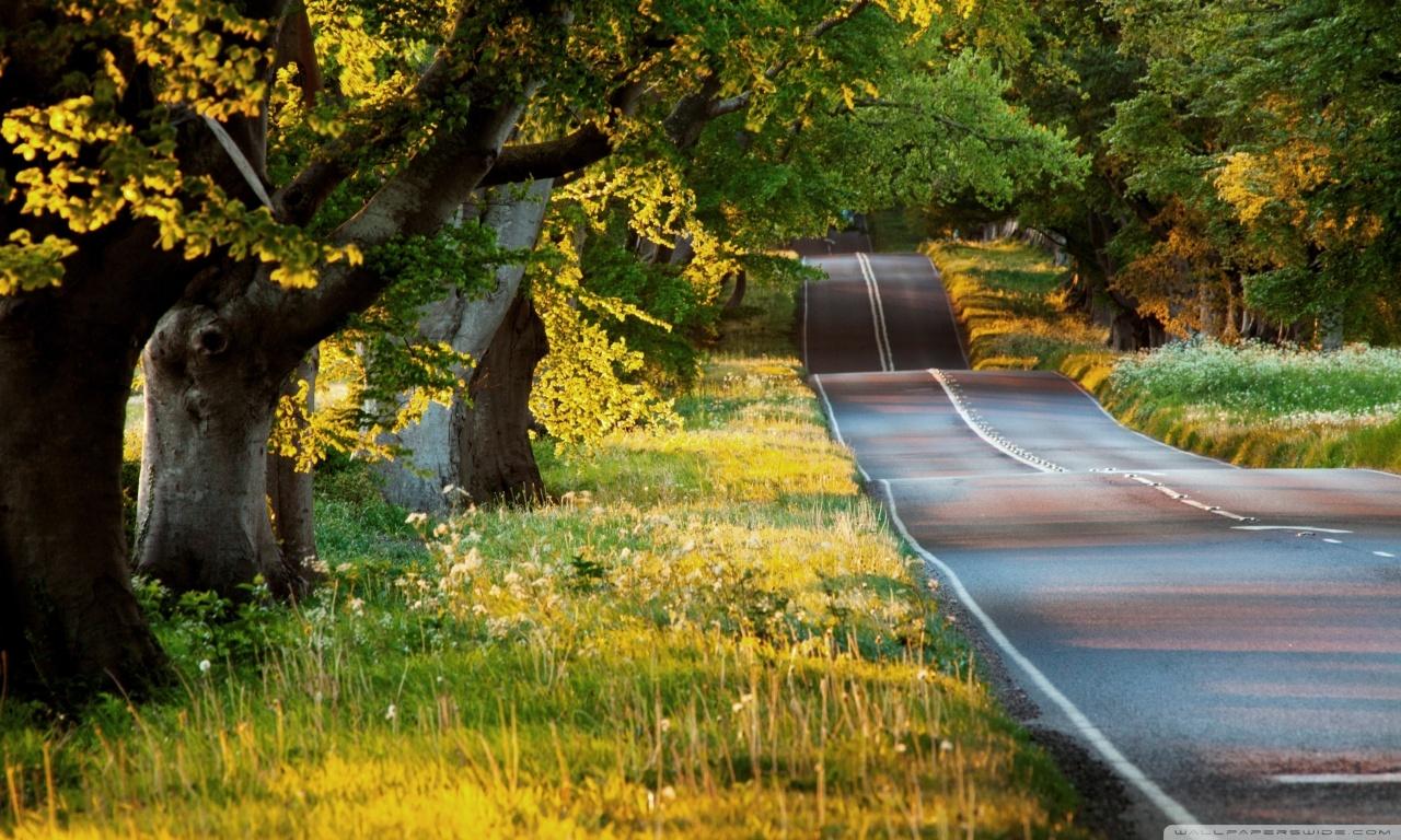 beautiful_road-wallpaper-1280x768